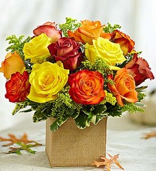 Autumn's Blooming Roses Flower Power, Florist Davenport FL