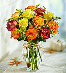 Rose Elegance Premium Long Stem Fall Roses Flower Power, Florist Davenport FL