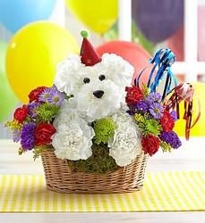 Another Year Rover Flower Power Florist Davenport FL