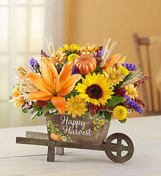 Happy Harvest Wheelbarrow Flower Power, Florist Davenport FL