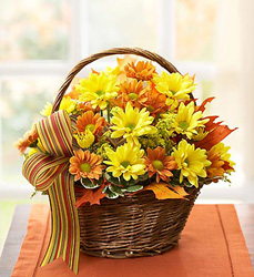 Fall Daisy Basket Flower Power, Florist Davenport FL