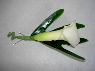 Mini Calla Single Boutonniere Flower Power, Florist Davenport FL