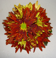 Red Rover Cake Topper Flower Power, Florist Davenport FL